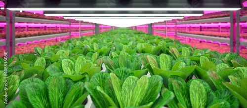 Valokuva Hydroponic indoor vegetable plant factory in exhibition space warehouse