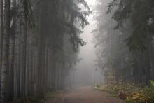 Path In Dark Eerie Forest On Misty Morning, Central Bohemian Region, Czech Republic