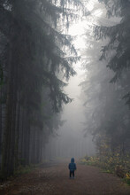 Rear View Of Young Boy Standing On Path In Dark Eerie Forest On Misty Morning, Central Bohemian Region, Czech Republic