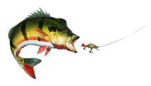Peacock Bass Cichlid Attack Golden Wobbler Bait. Amazon Big Peacock Bass Realistic Illustration Isolate Art.