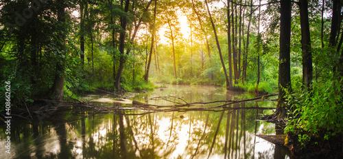 Fototapeta morning in the forest