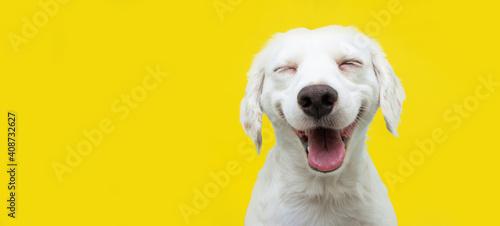 Photo Happy puppy dog smiling on isolated yellow background.
