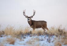 A Trophy Deer Standing In The Grass
