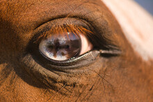 Close Up Of A Horses Blue Eye