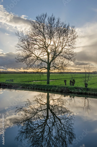 Canvas Print Solitary tree and spectacular sky reflecting in the calm water of a canal in the