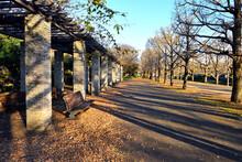 枯れ葉の上に長い影が映りこむ公園の休憩所