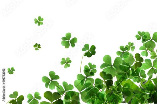 Fotografia Fresh green clover leaves on white background. St. Patrick's Day