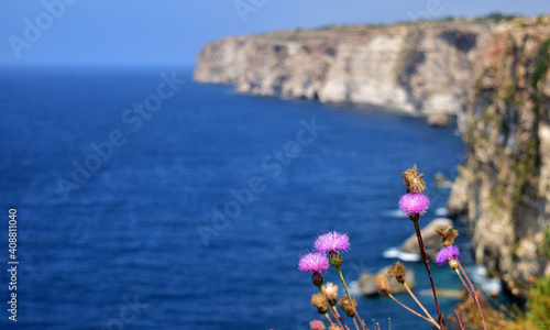 Fotografie, Obraz Closeup of rock thistles growing on cliffs surrounded by the sea in Malta