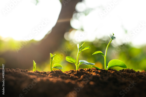 Three saplings are growing on the soil and a natural green background Fototapeta