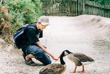 Teenage Boy Feeding Geese - Le Teich, Aquitaine, France
