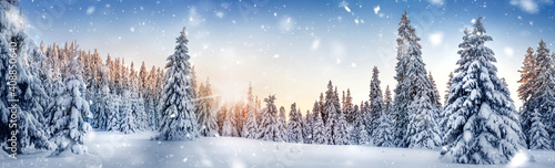 Fotografia Winter landscape background and snow, frost wide panorama with free space for yo