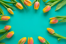 Fresh Yellow-red Tulips On A Mint Background. Holiday Concept