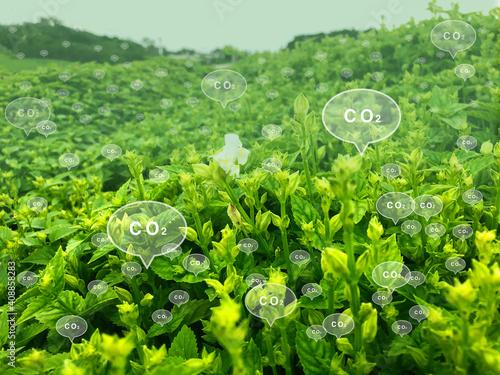 Cuadros en Lienzo 緑の草とCO2