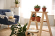 Stylish living room interior with wooden ladder and houseplants. Space for text