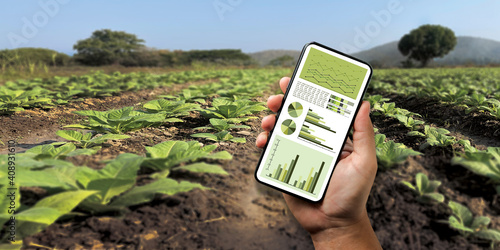 Fototapeta agriculture technology concept man Agronomist Using a Tablet Internet of things report. obraz