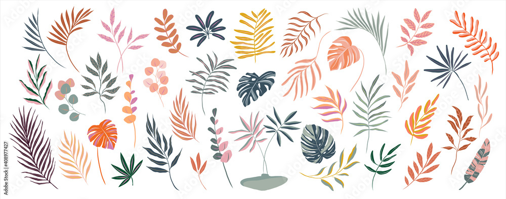 Fototapeta set of hand drawn modern tropical exotic leaves and branches illustration isolated on white background