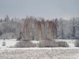 Piękna białowieska puszcza zimą