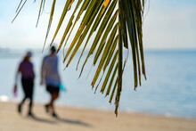 Palm Leaf On The Background Of The Sea On The Sunny Morning. In The Background An Elderly Couple Is Walking Along The Beach On The Morning.