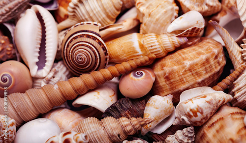 Fotomural a lot of different empty sea shells on background, macro details