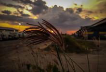 Peeking The Sun Through The Wheat
