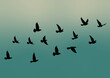 Flying birds silhouettes on gradient background. Vector illustration. isolated bird flying. tattoo design. wallpaper template.