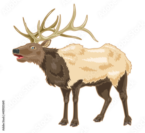 Elk cartoon illustration