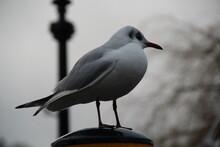 Seabird On The Park