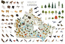 Isometric 3d Design Of Canada Wildlife. Animals, Birds And Plants Constructor Elements Isolated On White Set. Build Your Own Geography Infographics Collection.