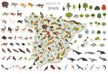 Isometric 3d Design Of Spain Wildlife. Animals, Birds And Plants Constructor Elements Isolated On White Set. Build Your Own Geography Infographics Collection
