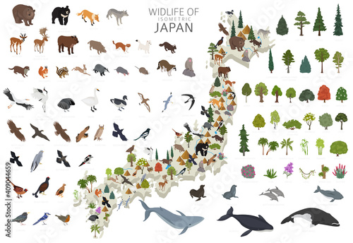 Fototapeta premium Isometric 3d design of Japan wildlife. Animals, birds and plants constructor elements isolated on white set. Build your own geography infographics collection