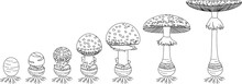 Coloring Page With Life Cycle Of Fly Agaric Mushroom. Stages Of Fly Agaric (Amanita Muscaria) Fruiting Body Matures Isolated On White Background