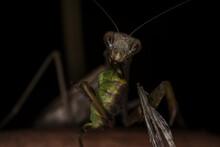 Extreme Macro Slow Motion Praying Mantis Eating A Grasshoper