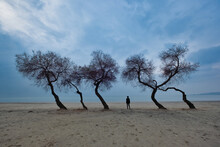 Woman Walking Isolated Among Odd Shaped Trees