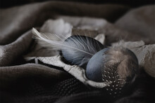 Macro Of Dark Blue Eggs Still Life With Feathers On Linen