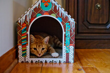 Orange Tabby Kitten Lays In A Cat House Made Of Gingerbread