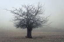 Lone Bare Tree On Field Against Sky In Foggy Weather, Vysoka Lipa, Bohemian Switzerland National Park, Czech Republic