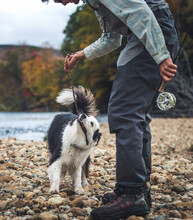 Fisherman Pulling On Stick In Dog's Mouth On Rocky Shore