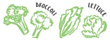 Set Of Cabbage, Lettuce And Broccoli Hand Painted With Ink Brush