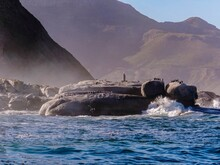 Cormorant Birds Waiting On Ocean Cliffs In South African Seal Bay