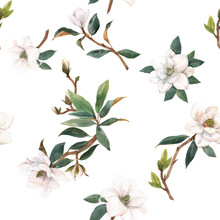 Beautiful Vector Seamless Pattern With Hand Drawn Watercolor White Magnolia Flowers. Stock Illustration.