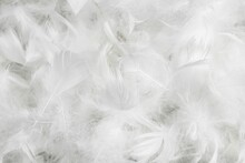White Fine Duck Feathers. Background Or Texture