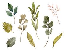 ナチュラルな葉の水彩イラスト