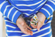 Closeup Of Hands Of Little Toddler Child With Spring Flowers. Girl Pick Flower For Mother.
