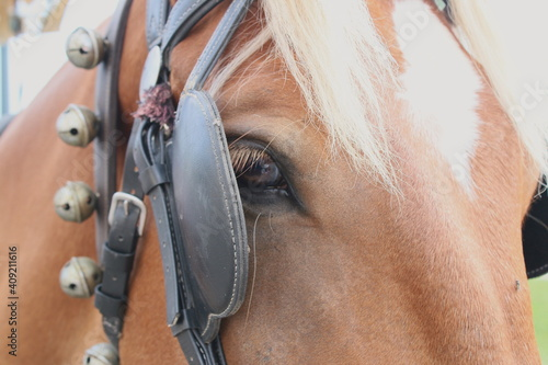 Valokuva A close up of a chestnut horses head a white star on forehead showing one brown