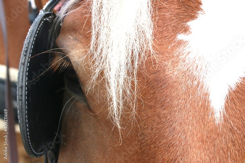 Fotografija A close up of a chestnut horses head a white star on forehead showing one brown