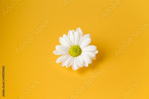 Fényképezés One white daisy flower on yellow background