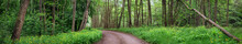 Country Road In Wild Beautiful Green Forest