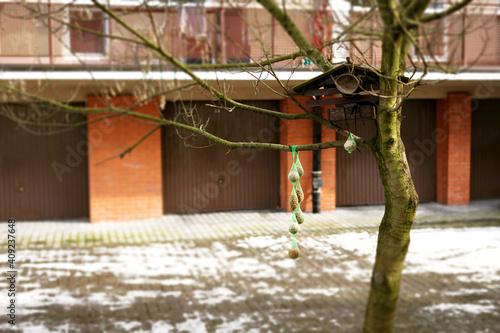 Fototapeta  Karmnik dla ptaków, zboże zimą obraz