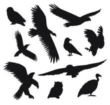 Vector Set Bundle Of Black Hand Drawn Wild Predator Bird Silhouette Isolated On White Background