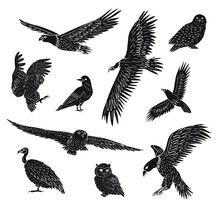 Vector Set Bundle Of Hand Drawn Doodle Wild Predator Birds Isolated On White Background
